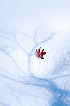 Winter is coming .autumn leaf in the winter snow and the shadow outline of a tree. I Love Snow, I Love Winter, Winter Is Coming, Winter Snow, Winter Christmas, Dark Winter, Winter Photography, Nature Photography, Winter Wonderland
