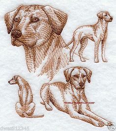 RHODESIAN RIDGEBACK DOG SKETCHES - 2 EMBROIDERED HAND TOWELS by Susan