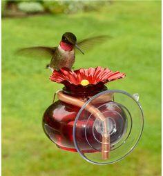 Window Watch Hummingbird Feeder | Bird Feeders & Squirrel Feeders