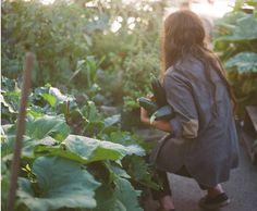 *zucchinis picking*
