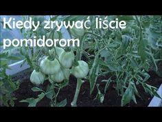 Green Garden, Container Gardening, Pergola, Plants, Youtube, Lawn And Garden, Outdoor Pergola, Plant, Container Garden