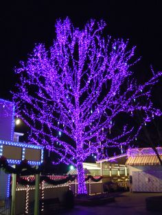 dollywood christmas - Google Search