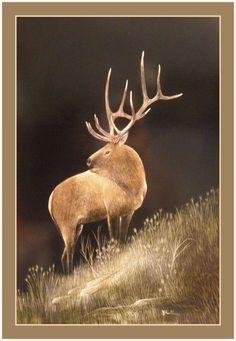 Elk on Hillside Greeting Card 4.5 x 6.5
