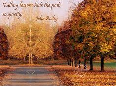 Quiet Autumn leaves