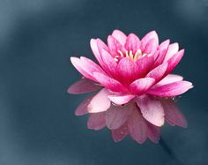 Enchanted #flower #photography #pink