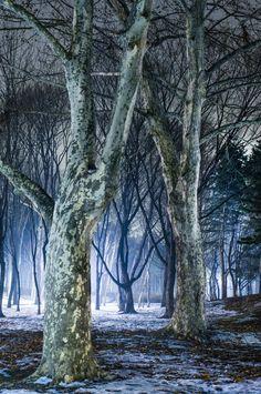 2014 에이트리 사진전 '나무(Tree)' | Artnews