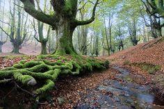 Hayedo de Otzarreta, Parque natural de Gorbea. Pais Vasco. España #Spain