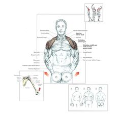 Top shoulder workouts for beginners - Are you beginner? find the workouts for your shoulder that is used in top gyms. Plyometric Workout, Plyometrics, Calisthenics, Workout Routine For Men, Workout For Beginners, Workout Men, Muscle Fitness, Mens Fitness, Gain Muscle