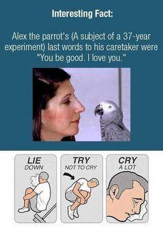Alex ❤❤❤