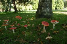 """""""You have found a faerie Ring deep within the forest, a circle of mushrooms .People will speak to you of spore and fungus circle. They would say that each season of growth fungus sprouts outside the edge of the space it filled the previous season.Those who have opened their minds, hearts and souls to the realms of magic may speak to you of the faeries. Those who know the faeries will tell you that faerie rings are where the Faeries dance and perform many of the rituals of their own magic."""""""