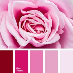 19 The Perfect Pink Color Combinations { Pink Peonies } Pink Hues Color Palette Pink And Blush Colou Red Colour Palette, Pink Palette, Hue Color, Color Shades, Colours, Color Schemes Design, Pink Color Schemes, Pink Color Combination, Raspberry Color