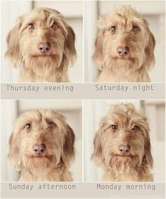 Olav's week....  Which look do you like the most? :-)