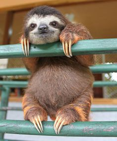 30 Gorgeous Animals More Photogenic Than You.