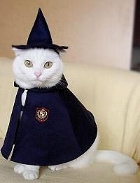 28 Cats in Costumes