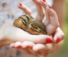 I would like a pet chipmunk please ; )