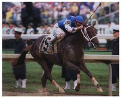 2004 Kentucky Derby - Smarty Jones Near The Wire Horse Fly, Horse Racing, Kentucky Derby, Smarty Jones, Bold Ruler, Winning Time, Preakness Stakes, Derby Winners, Thoroughbred Horse