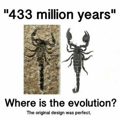 Well if you don't believe in evolution and you think that we can be perfect you are probably a Cristian but didn't the world start 6000 years ago? Christian Apologetics, Christian Memes, Science Facts, Bible Truth, Conspiracy Theories, Ancient Aliens, Science And Nature, Archaeology, Knowing God