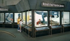 lake underwater diorama museum exhibition - Google Search