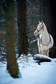 Vision in the Woods Johanna Passon Photography, Germany All The Pretty Horses, Beautiful Horses, Animals Beautiful, All About Horses, Horse Photography, Amazing Photography, White Horses, Horse Pictures, Horse Love