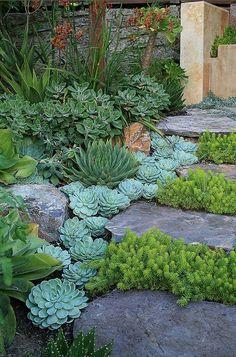 Love this succulent garden arrangement