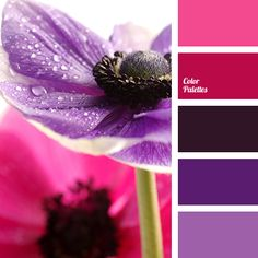 Luxury royal palette is built on a contrast of deep purple and cow-berry colors is complement by dark and bright violet colors and a cheerful shade of stra.