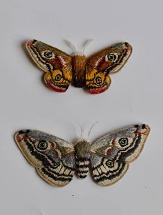 Hand embroidered raised work, three dimensional male & female Emperor Moth.  Hand stitched & handmade in Buckinghamshire. The Emperor Moth is the only resident of the Saturnaiidae family we have in Britain, and is relatively common. The males, which are brighter in colour, fly during the daytime in search of the greyer females, which fly at night.  These two Moths can either be framed a box frame, in the traditional entomology & lepidoptery style, or in a bell-jar.    (N.B - Books...