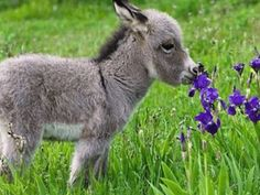 D donkey baby donkey is the the cutest