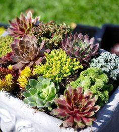 Kivikkokasvi-lajitelma Succulents, Plants, Succulent Plants, Plant, Planets