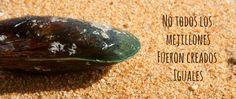 ¿Conoces ya las bondades del Mejillón de Labio Verde?  Te lo explicamos todo!  www.puromenu.es