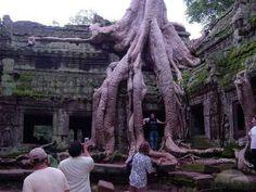 le temple Ta Phrom au Cambodge
