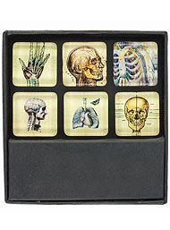 X-Ray Anatomy Skeletal Magnet Set