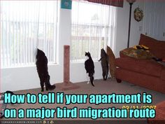 funny bird pictures with captions - Google Search