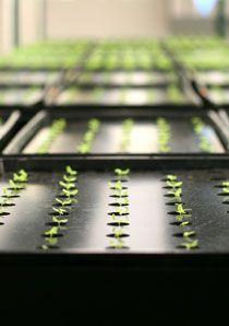 How To Propagate & Clone Plants   Plant Propagation Website