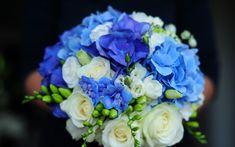 agapanthus niebieski - Szukaj w Google