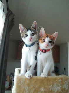 #Cats - Jessy B. - Google+