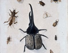 """Curator Kate Teichen explores the new Colonial Williamsburg exhibit """"Birds, Bugs and Blooms: Observing the Natural World in the 18th Century."""" -- Mark St. John Erickson"""