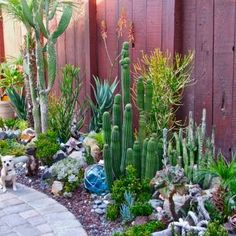 We had a cactus garden like this in Austin back in the 60's and it was so cool...