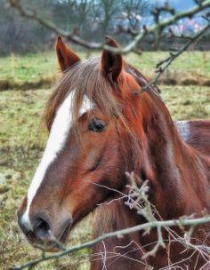 Horse | Flickr - Photo Sharing!
