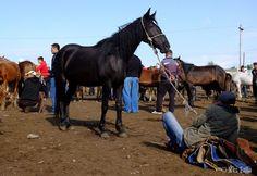 Venta de caballos en el mercado de animales de #karakol #kirguizistan