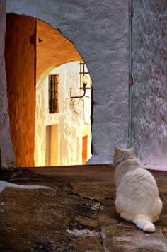 White cat in Patmos, Greece I Love Cats, Cute Cats, Funny Cats, Funny Cat Compilation, Cat City, Greek Islands, Beautiful Cats, Cute Animals, Baby Animals