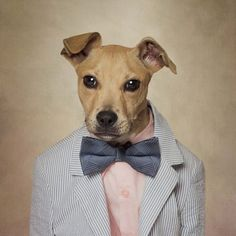 Shelter Pets Project - Butterscotch Photo by Tammy Swarek — National Geographic #accessories #adoptable #adorable #animal #animals #arkansas #art #beautiful #best #blonde #bowtie #boy #butterscotch #campaign #celebrity #charity #clothes clothing #couture #cute #dapper #designer #dog #dogs #dogswearingclothes #dressed #easter #eldorado #fashion #fine #art #fineart #formal #holiday #jacket #lab #labrador #menswear #mix #opttoadopt #pet #pets #photographer #photography #pink #portrait