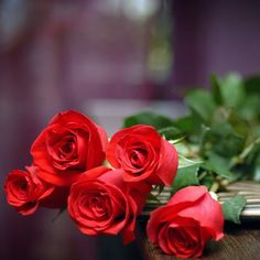 Red roses, England's national flowers, to celebrate St. George's day on the 23rd of April.