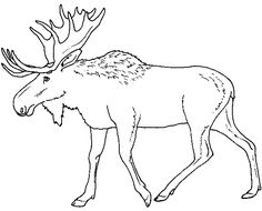 High Quality The Occasional Run In Between Moose And Cars Are To Be Expected During  These Highly · Free Printable Coloring PagesAnimal ...