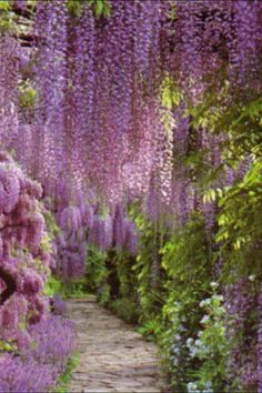 Why doesn't my Wisteria look like this?!?!?!  Ugh.....