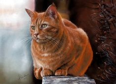 """RED TABBY CAT "" - Christina Schulte"
