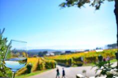 Y de #Cantabria hasta #CastillaYleon con los colores otoñales. Y una parada obligatoria es el #PalacioDeCanedo para disfrutar de los vinos de @pradaatope con este solazo otoñal. . . #CastillaYleon #elbierzo  #TierraDeSabor
