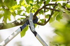 Beskjæringsguide: Dette er hageekspertenes tips - Byggmakker Pruning Shears, Garden Tools, Tips, Yard Tools, Outdoor Power Equipment