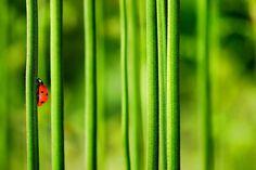 A lonely ladybug