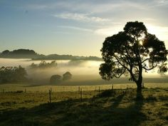 FOG IN THE MORNING TAKEN AT CARRARA AVOCA  MY OLD HOME IN THE SOUTHERN HIGHLANDS.