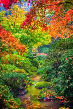 Gardening Autumn - Autumn Serenity In Portland Japanese Gardens With the arrival of rains and falling temperatures autumn is a perfect opportunity to make new plantations Beautiful World, Beautiful Gardens, Beautiful Places, Beautiful Pictures, Beautiful Forest, Beautiful Gorgeous, Beautiful Scenery, Portland Japanese Garden, Japanese Gardens